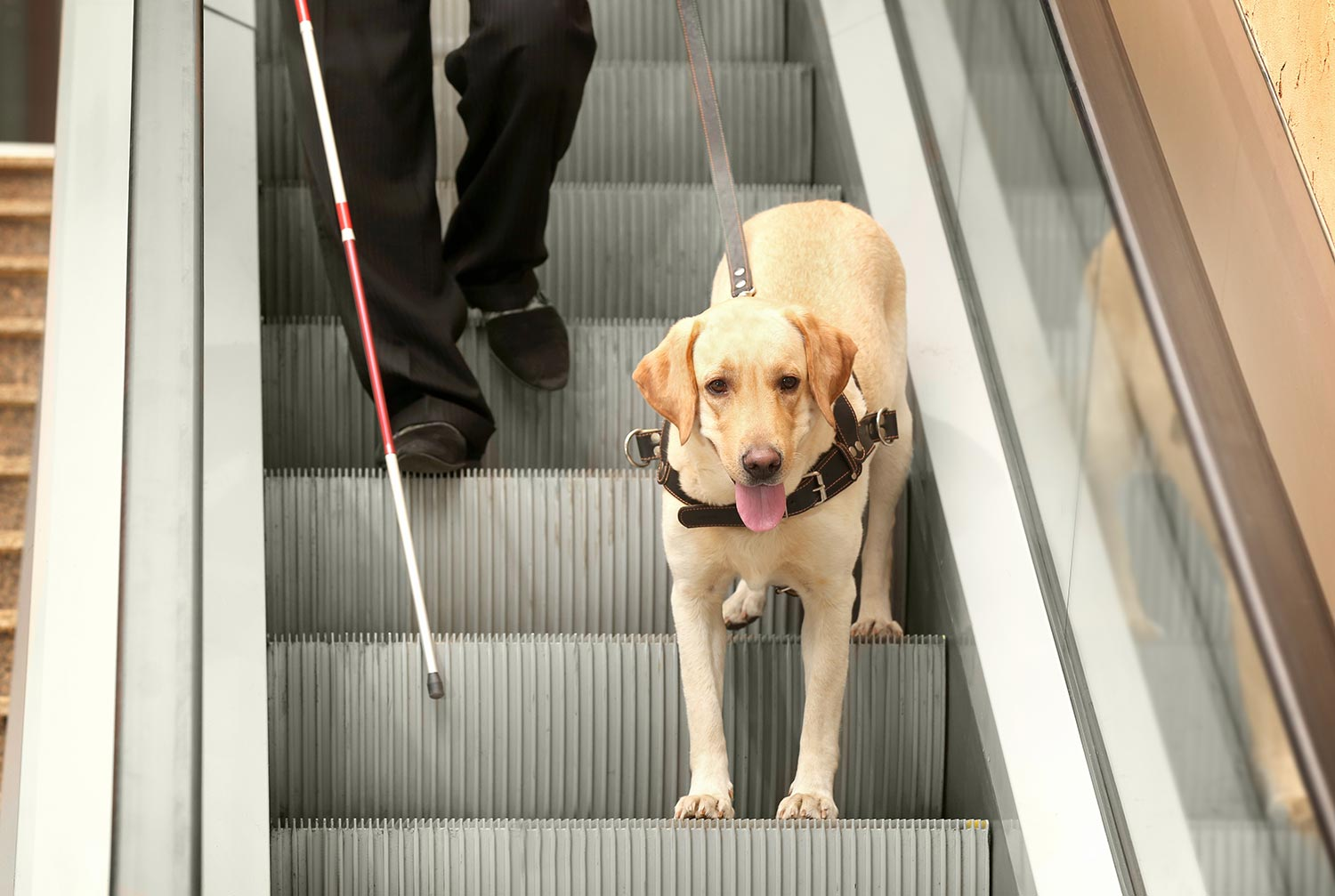 Service-Animals-&-Airlines